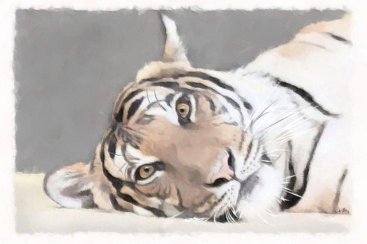DESSIN tigre felin sauvage prédateur - Portrait Tigre                                                                                                                                                                                 Plus