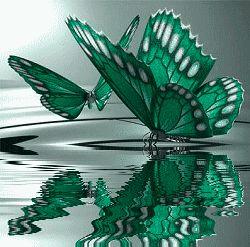 Matiz del verde en un reflejo sutil que regala saludos de mariposa