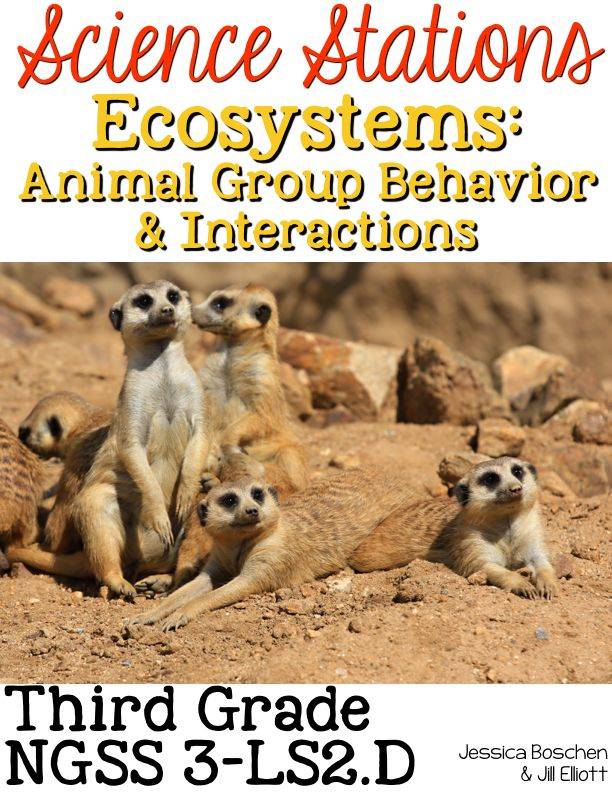 Ecosystems: Animal Group Behavior & Interactions Science Stations for Third Grade Next Generation Science Standards include 8 different science stations where students can deepen their understanding of how animals interact with each other. The focus is on NGSS 3-LS2.D and include concepts such as social groups, animal homes, and migration.