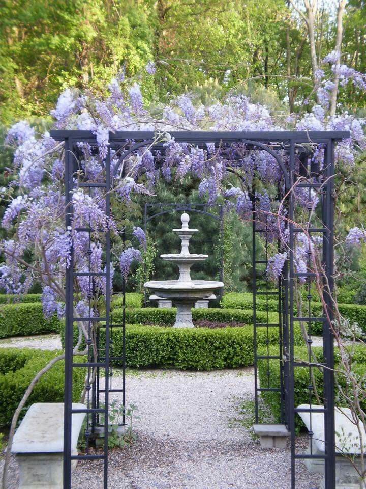 Wisteria, Plantsville Pine Gardens