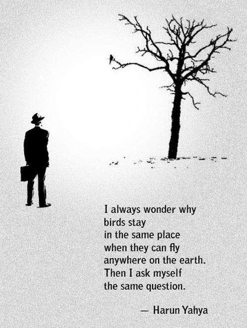 """""""I always wonder why birds choose to stay in the same place when they can fly anywhere on the earth, then I ask myself the same question""""."""