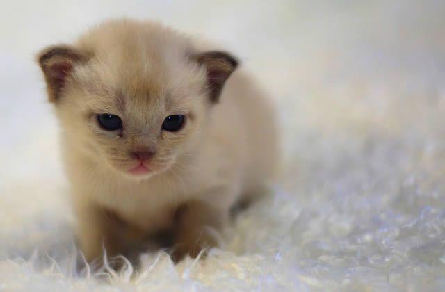 Pourquoi les animaux mignons nous rendent ils dingues - Photo de chaton rigolo ...