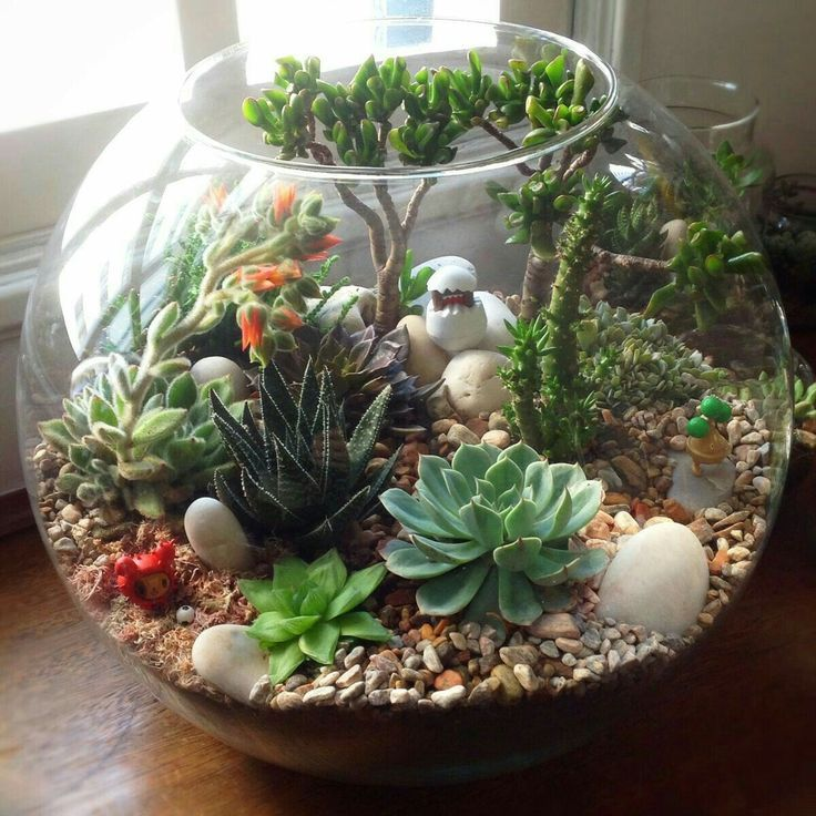 incredible 69 Excellent DIY Small Cactus Succulent Decoration Ideas