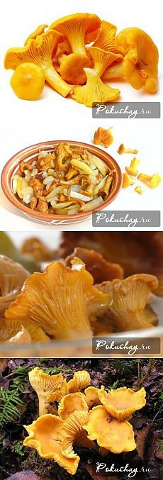 Как сушить лисички на зиму - способы сушки грибов / рецепт с фото