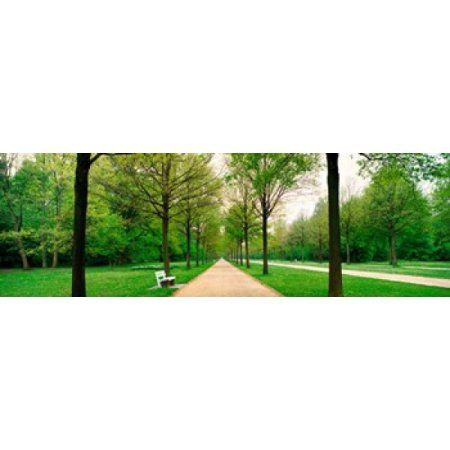 Tree-lined road Hessen Kassel vicinity Germany Canvas Art - Panoramic Images (36 x 12)