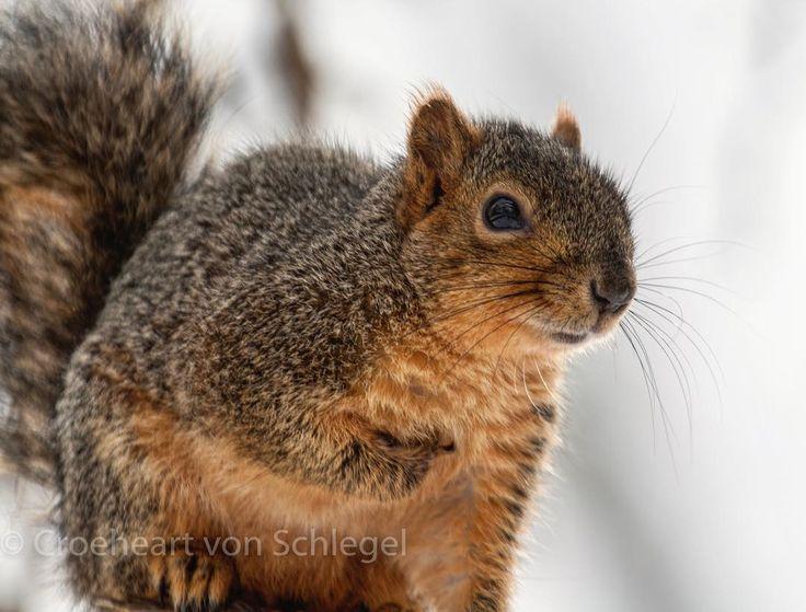 """ARE YOU TALKING TO ME!?! Oh, I don't think so camera boy... #idahodaily #heliograven #croeheartvonschlegel #squirrels #idahodailynature  Julia Davis Park, Boise"