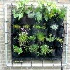 Eetbare Wand: de kruidentuin voor aan de muur door Welke-Redactie
