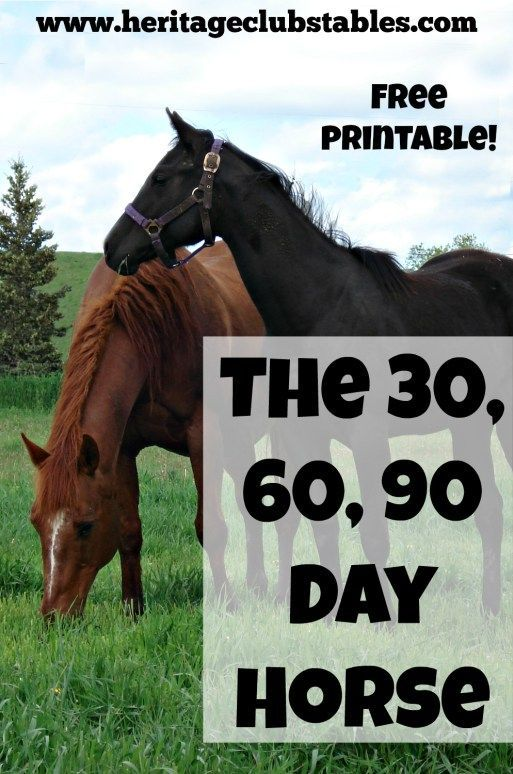 """What should a horse know by the end of 30 days?"" Print out this helpful, FREE printable: The 30 60 90 day horse to give you a training starting point."