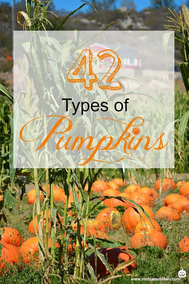42 Types of Pumpkins