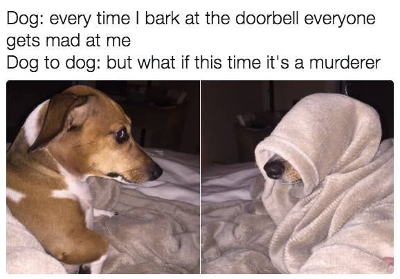 100 Dog Memes That Will Keep You Laughing For Hours Dog Memes Funny Animal Memes Animal Memes