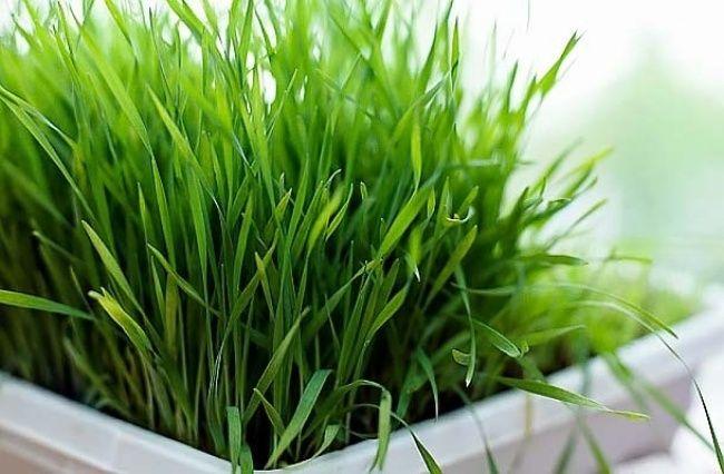 9съедобных растений, которые можно вырастить прямо накухне