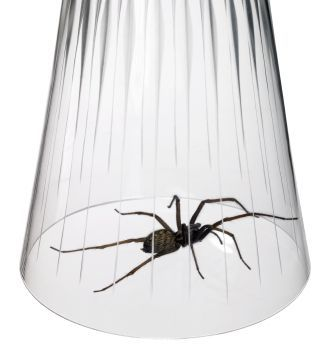 This Is A Guide About Getting Rid Of Spiders. Many People Wish To Get Rid  Of Spiders And Remove Them From Their Home, Basement, Attic, Garage And Yu2026