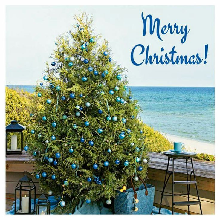 Winter Beach Coastal Christmas Christmas Trees Merry