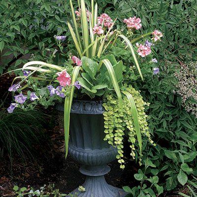 Http Www Finegardening Com 10 Plants Year Round