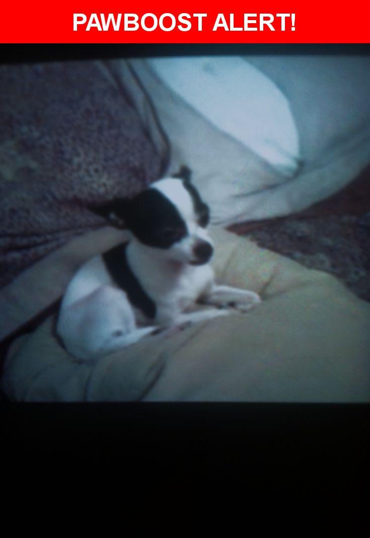 Please spread the word! Oreo was last seen in Coachella, CA 92236.    Nearest Address: Near Avenue 52