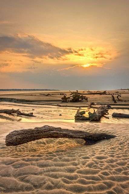Jeckyll Island, Driftwood Beach. It is covered by the remains of many trees, which have been preserved by the salt air and water from the ocean