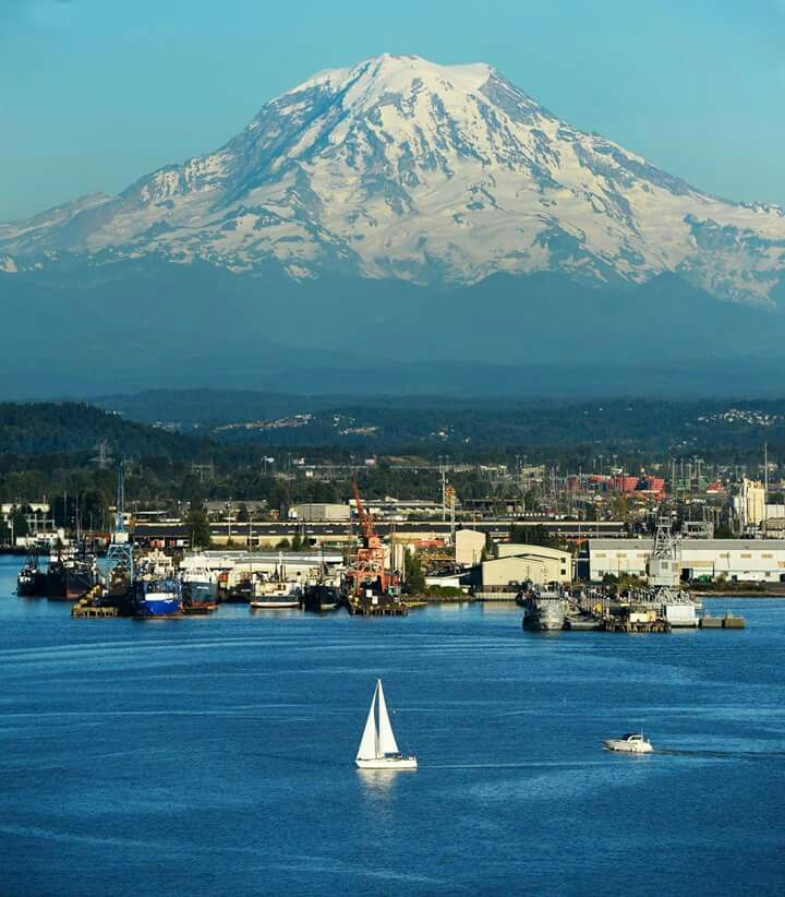 Washington State Native Plants: 25+ Best Ideas About Mount Rainier On Pinterest