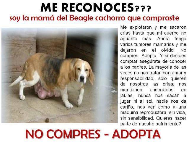 Contra la venta de cachorros de perros beagle Tarragona