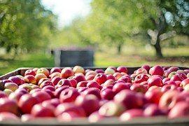 Яблоки, Осень, Фруктов, Природа, Питание