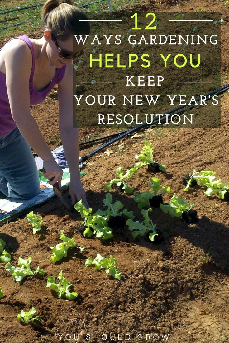 Best 25+ Organic vegetables ideas on Pinterest | Small organic ...