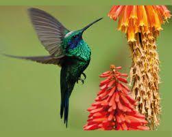 Resultado de imagen para biodiversidad aves de colombia