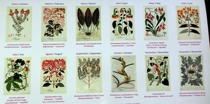 Mutis en el calendario 2015 del Real Jardín Botánico de Madrid