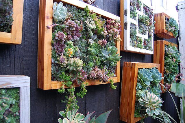 Living Art!  You can make these by using 1/2 inch hardware cloth stapled onto a frame of some sort, filling with soil and, and plugging the little succulents in the holes.