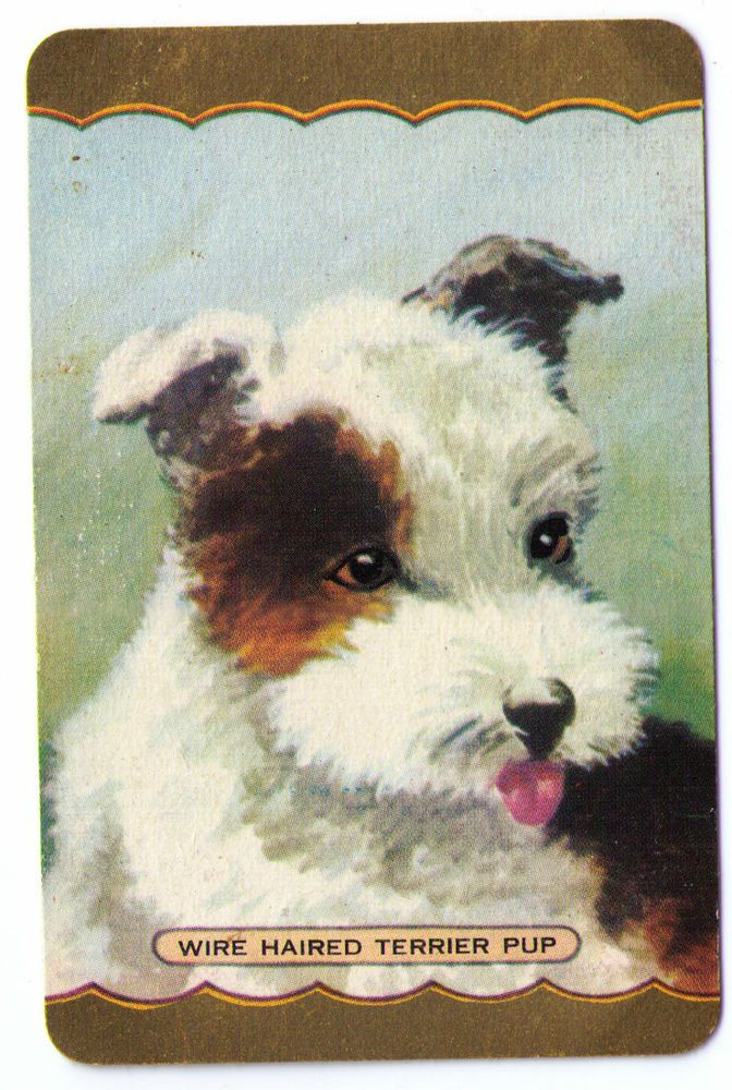 SWAP / PLAYING CARDS COLES NAMED SERIES - DOG THEME - WIRE-HAIRED TERRIER PUP