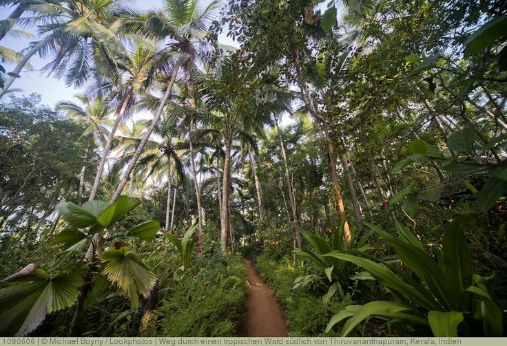 Weg durch einen tropischen Wald südlich von Thiruvananthapuram, Kerala, Indien