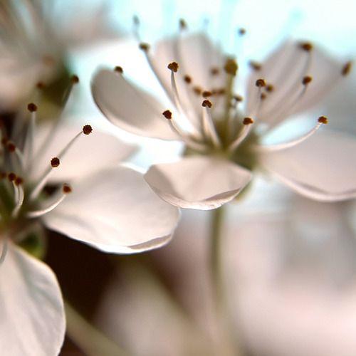17 Best Images About Rêves En Couleur. On Pinterest