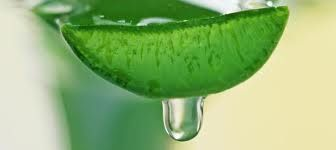 Acemannan, a polysaccharide found in pure aloe vera juice has tremendous healing affects, cleansing and rebuilding the body, fighting off bacteria, viruses, etc.