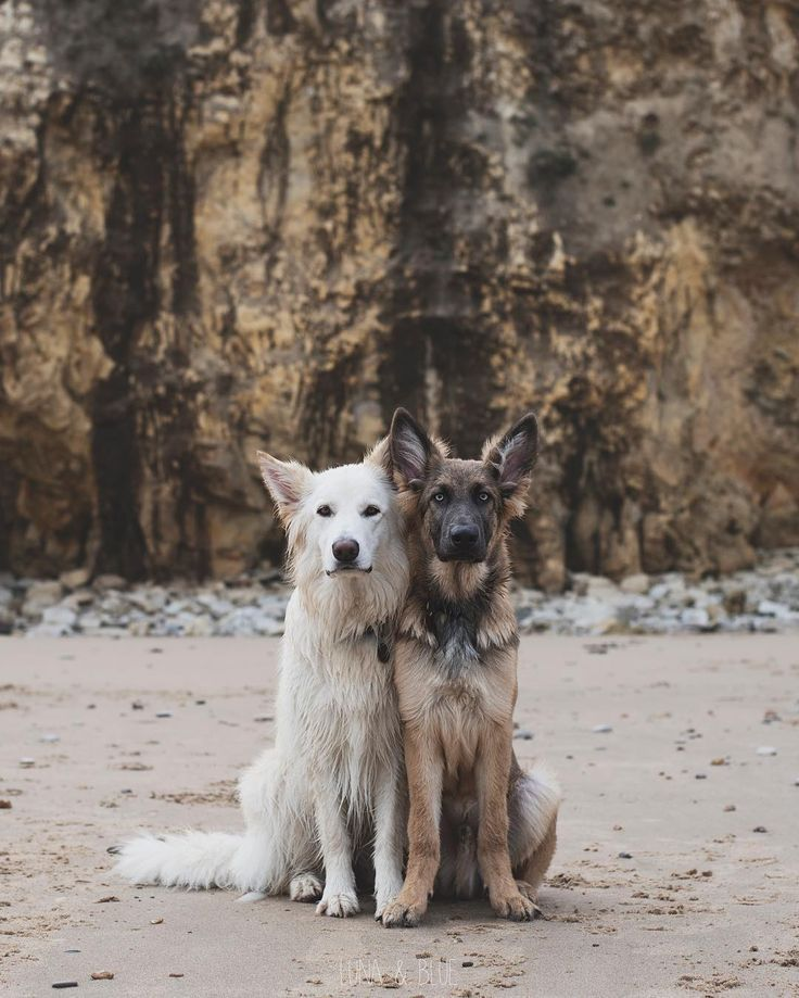 Beautiful pair of best friends!