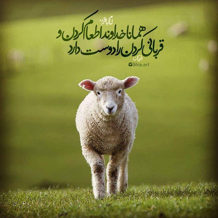 تبریک عید قربان Animals Lamb