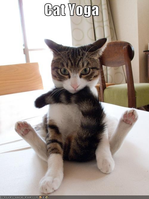 Cat Yoga   Funny   Pinterest