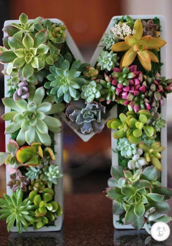 Vertical Succulent Garden Monogram... kinda cool way to include nature into crafts!