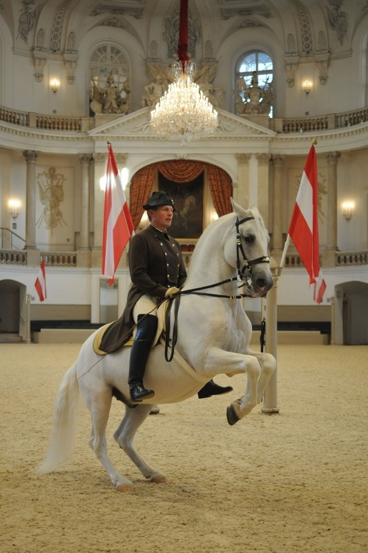 Classical dressage Spanish Riding School Vienna, Austria...I will go, I just have to wait until A. is old enough, they don't allow children.
