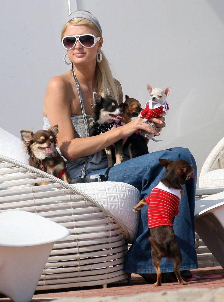 EN FLOKK: Paris tok med seg hele seks hunder da hun skulle på husjakt. Praktisk?