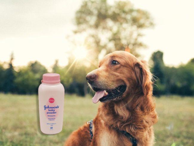 Gebruik babypoeder als droge shampoo voor een huisdier