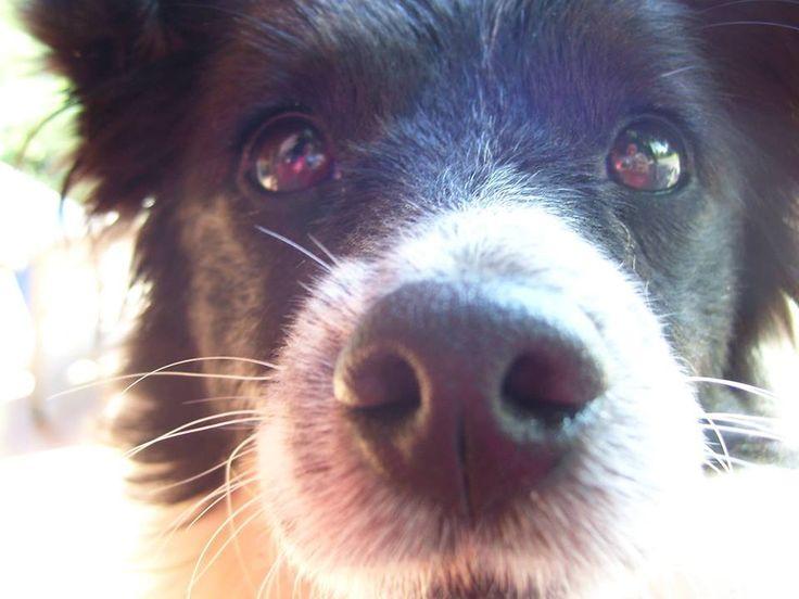 Di naso in naso a Villa Tessa: una serata sul fiuto del cane :http://www.qualazampa.news/event/di-naso-in-naso-a-villa-tessa-una-serata-sul-fiuto-del-cane/