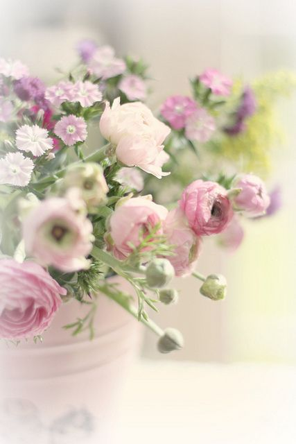 flowers of spring  by  Lucia  and  Mapp
