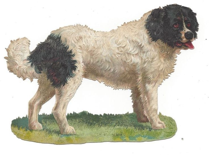 Victorian Die Cut Scrap Large Saint Bernard