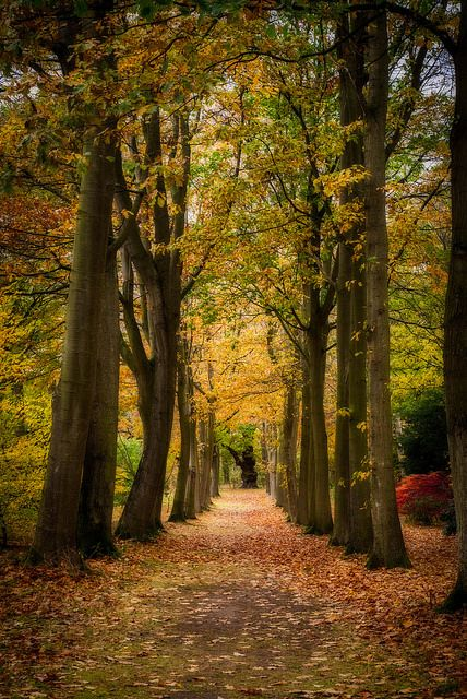 The woods | by Christopher Combe Photography