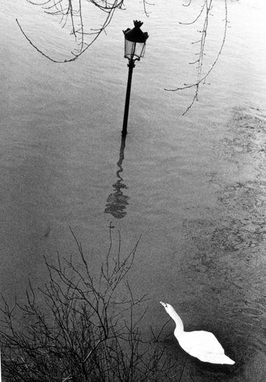 Kertesz, Paris 1982