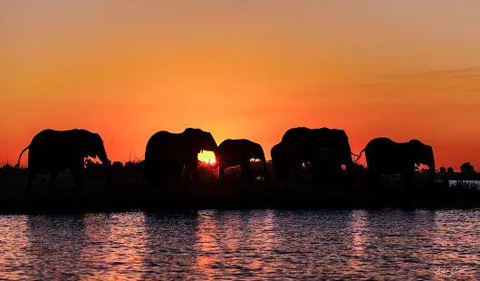 Stado - photo by Kaśka Sikora   #elephants #chobe #choberiver #riverside #słonie #africasafari  #Sikora #wildlifephotography #wildlife #animalkingdom #animals #KaśkaSikora #landscapephotography #safari #boatsafari #KatarzynaSikora #fotografWarszawa