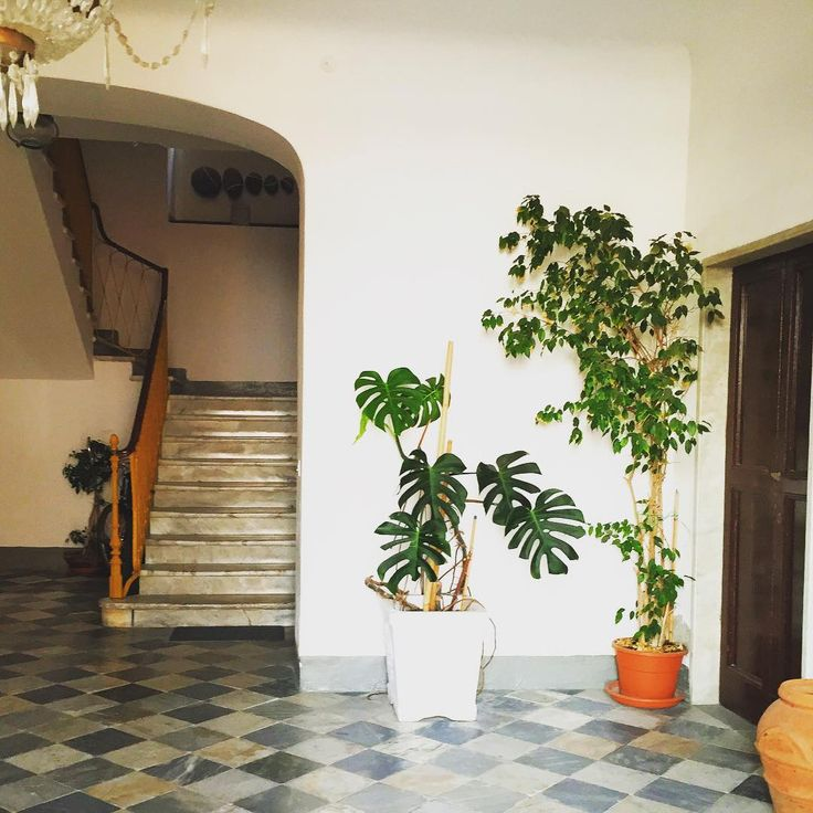 Foyer Plants : Images about entryway and hallway plants on