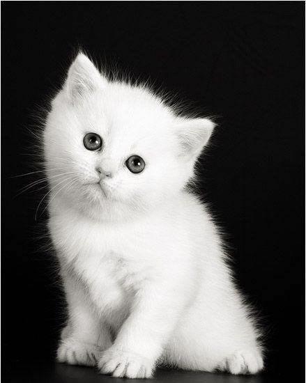 gatitos lindos y tiernos - Buscar con Google