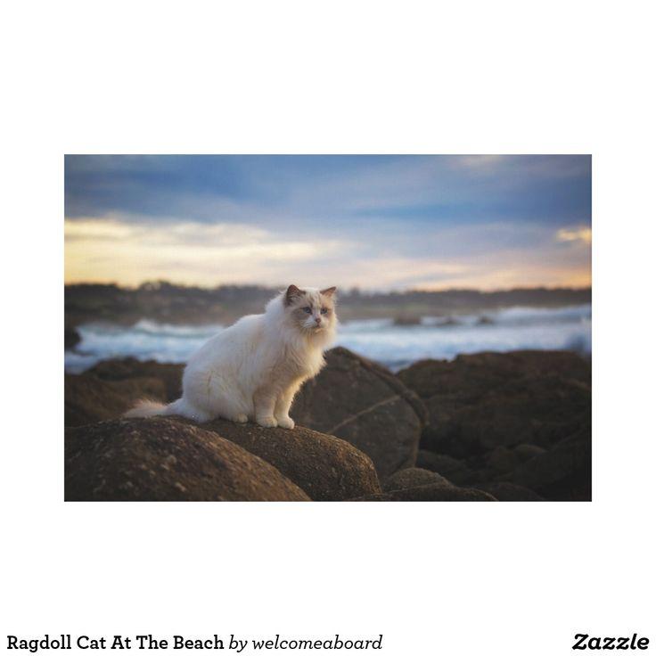 Ragdoll Cat At The Beach Canvas Print | Zazzle.com