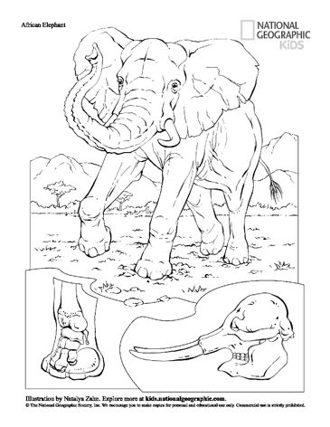 PDF -> GIF: National Geographic: omalovánky zvířat