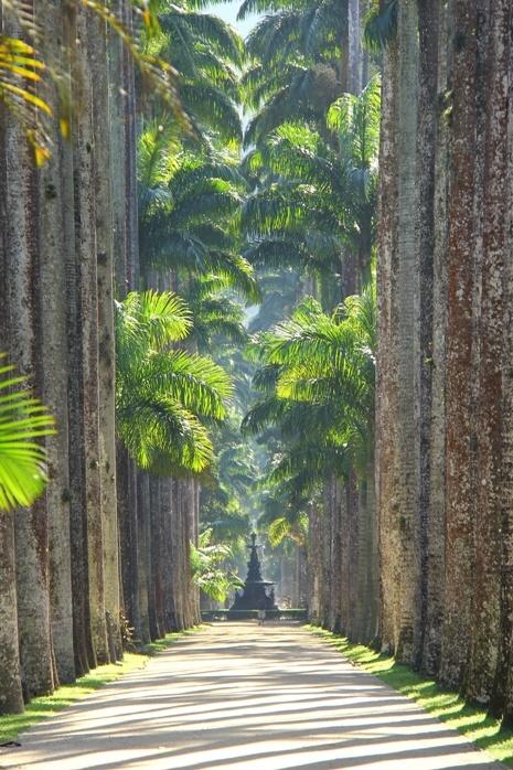 Botanical Garden ir Rio - Brazil. Ricardo Lívio picture