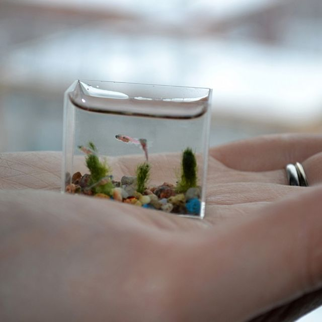 No matter how small your apartment is, you can definitely fit in the world's smallest aquarium!